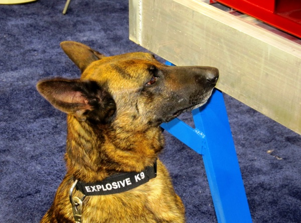 Explosives Detection Canines in Houston