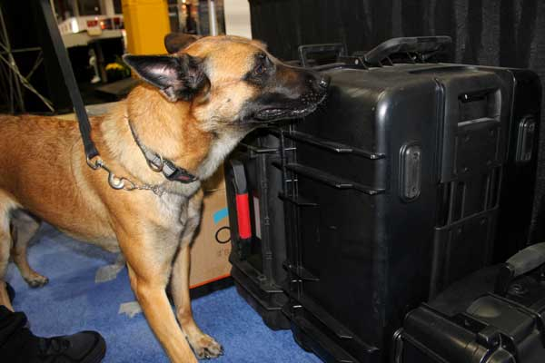 Bomb Detection Dogs Explosive Detection K9